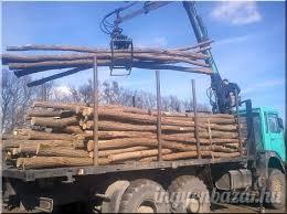 34 köbméter fát koboztak el