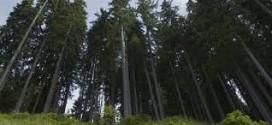 Továbbra is gyors ütemben irtják az erdőt Erdélyben