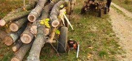 Félholtra vertek egy erdészt a fatolvajok Maros megyében