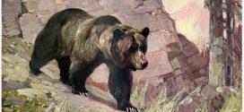 Embert ölt a medve