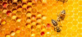 Erdélyi méhészegyesület alakul